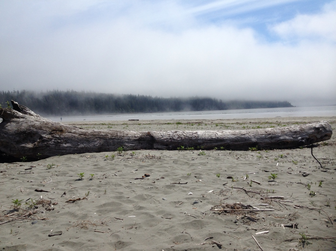 Fog obscuring the tops of trees at the edge of a sandy beach with driftwood.
