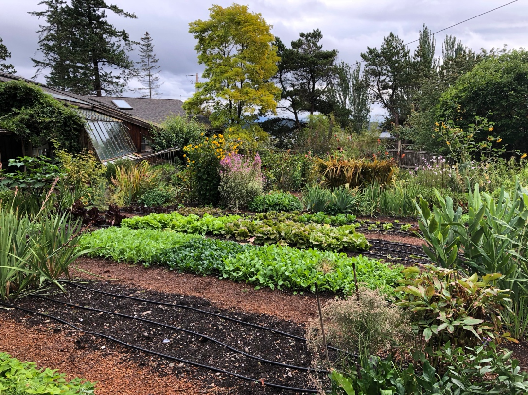 Garden, vegetables, irrigation, hollyhock resort