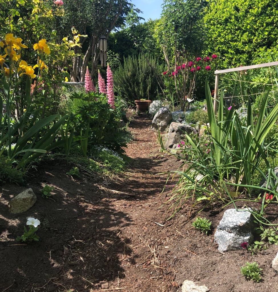 Daphne, Angelica, garlic, peonies, buddleia, Rosemary, lupin